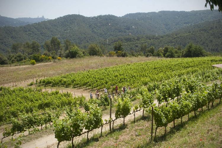 Collserola i cata vins (5)